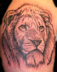 Lion_Tattoo_Shahki_Knott