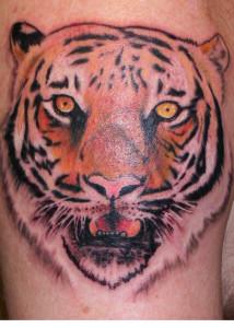 Tiger_Tattoo_Shahki_Knott